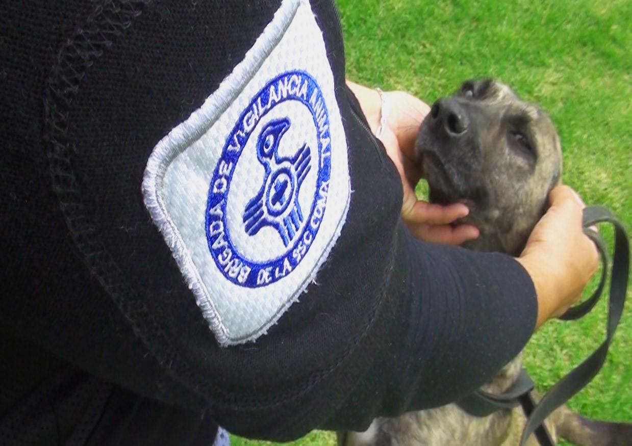 brigada animal (1).jpeg