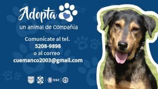 AdoptaPerros.jpg